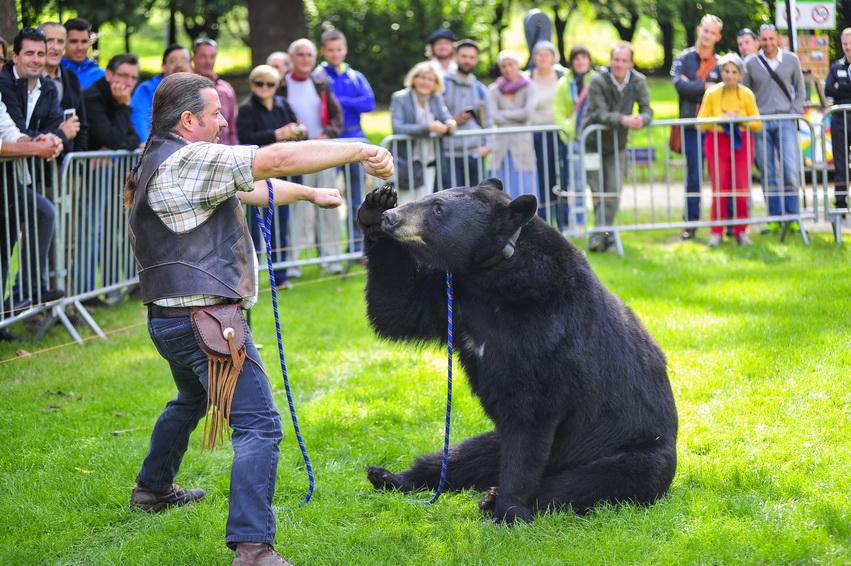 Création d'univers dompteur d'ours